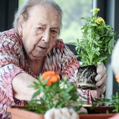 Mujer plantando una planta en un maceta